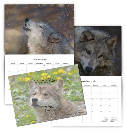 Wolves Calendar designed using our Online Photo Calendar Designer
