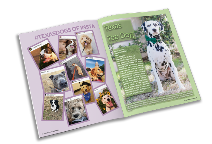 Non-Profit Magazine Printing Example