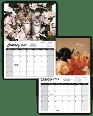 kitten-example-2020_612x762-1